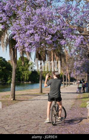 Argentina. Buenos Aires during springtime. Young man taking pictures at Parque 3 de Febrero under Jacaranda trees - Stock Photo