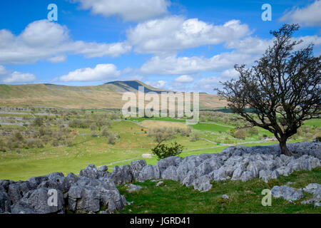 Whernside from White Scar, North Yorshire Dales, England - Stock Photo