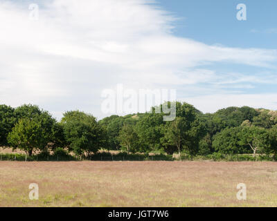 an empty farm field with trees and clouds on a sunny day; Suffolk; UK - Stock Photo