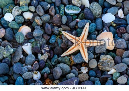 Sea star on colorful beach rocks. - Stock Photo