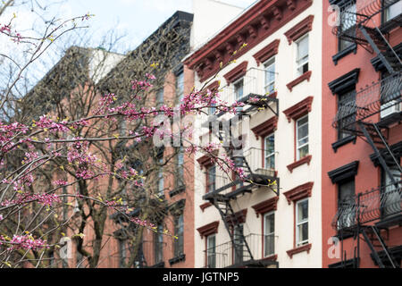 New York City spring street scene with colorful blooming tree and background of old apartment buildings