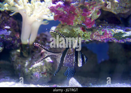 Gold tropical fish in aquarium with open mouth and looking for Jan s tropical fish