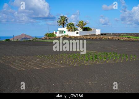 Organic farm, agriculture at Yaiza, Lanzarote island, Canary islands, Spain, Europe - Stock Photo