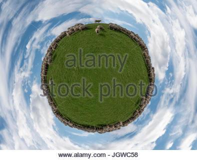 Tiny World Sheep - Stock Photo