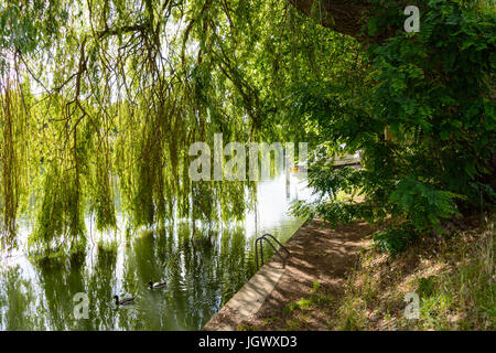 A weeping willow tree on the bank of a river and its branches filtering the light and falling like a curtain till - Stock Photo