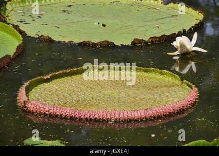 Big golden buddha with lotus flower at da lat vietnam stock photo dalat vietnam big lotus leaves at the ancient siam park stock photo mightylinksfo Image collections