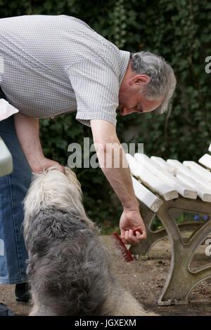 Dog of Estimate, São Paulo, Brazil - Stock Photo