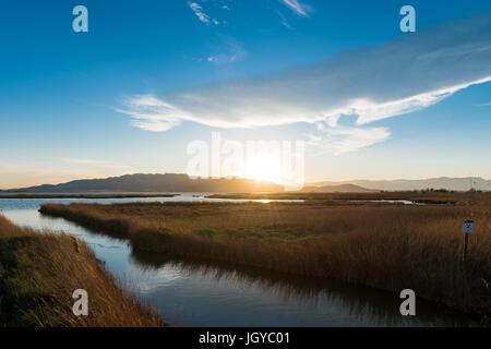 Delta de l'Ebre scenery. Rural view at Delta de l'Ebre.  Rice field, River Ebro Landscape, Catalonia, Spain - Stock Photo