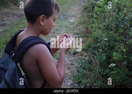 Boy picking blackberries. France. - Stock Photo