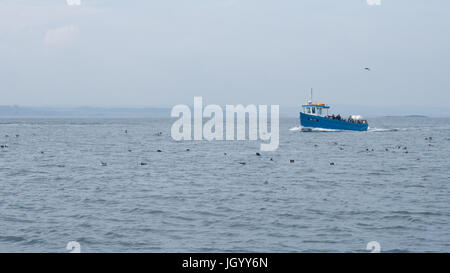 A boat among seabirds in the  Farne Islands, Northumberland, England - Stock Photo