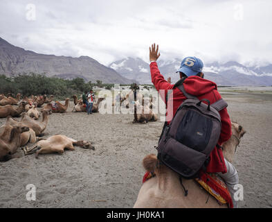 Leh, India - July 19, 2015. A tourist riding camel in Nubra valley, Ladakh, India. The valley was open for tourists - Stock Photo