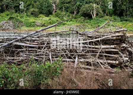 Pile of tree branches in Nagarhole National Park in Kabini, Karnataka, India - Stock Photo