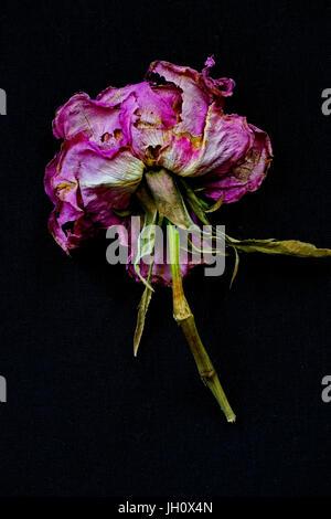 Dried flower potpourri - Stock Photo