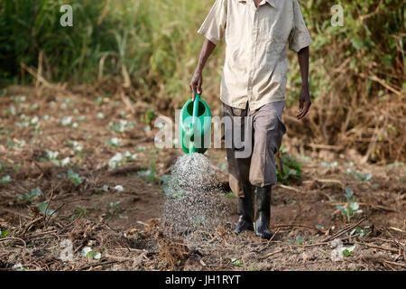 Farmer Apollo Byarunga received 2 loans from ENCOT microfinance. Uganda. - Stock Photo