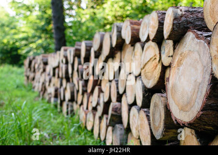 A big pile of wood in the forest on the background of green trees in a sunny day. - Stock Photo