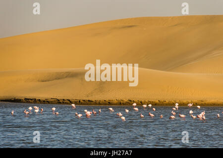 Saltwater pool with flamingos near Walvis Bay, Namibia, Africa - Stock Photo