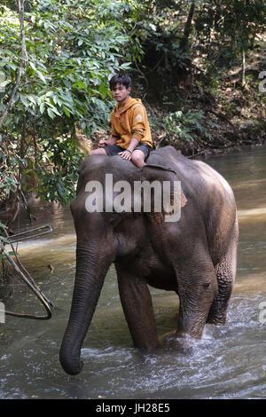Mahoot riding elephant, Elephant Sanctuary, Mondulkiri, Cambodia, Indochina, Southeast Asia, Asia - Stock Photo