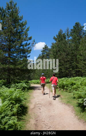 Hikers proceed on the path in the green woods of Col de Bavella (Pass of Bavella), Solenzara, Southern Corsica, - Stock Photo
