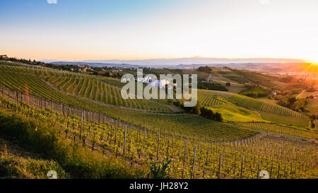 Vineyards in the Piedmont region of northern Italy, Europe - Stock Photo