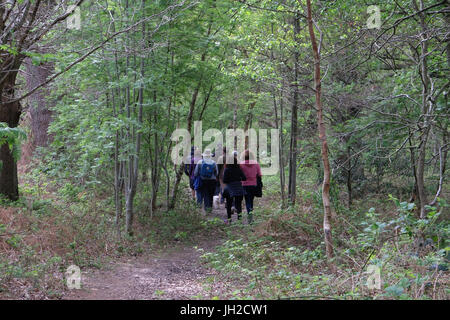 Group walking in the woods - Stock Photo