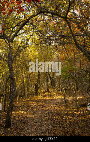 Trees create a natural archway over a hiking trail in the Forth Worth Nature Center and Refuge - Stock Photo