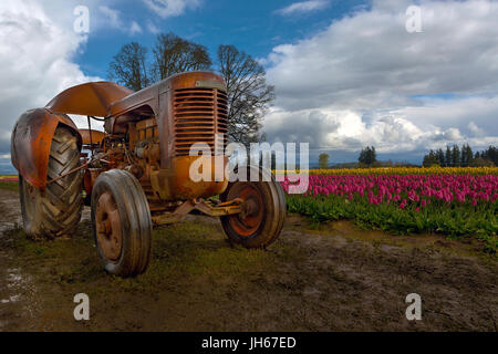Orange Tractor in tulip field at Wooden Shoe Tulip Festival in Woodburn Oregon - Stock Photo