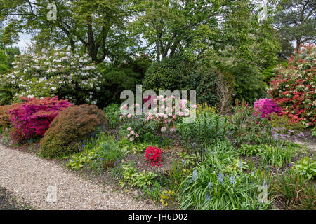 A collection of shrubs that prefer acidic soil such as rhododendron and azaleas in the gardens at Forde Abbey, Dorset, - Stock Photo