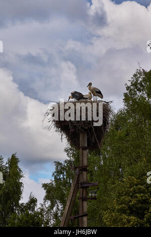 A nest of cranes on a column.Crane family in the nest. A nest of branches is located on top of a column of electric - Stock Photo