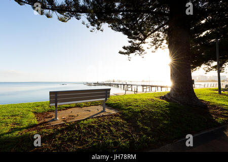 An empty park bench with a view over the sea under a beautiful tree back lit by bright sunrise light on a sparkling - Stock Photo