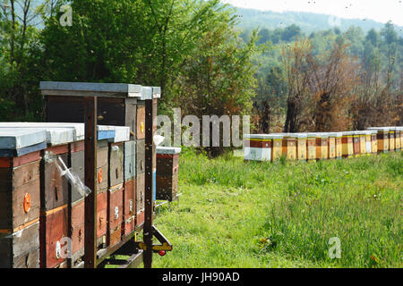 Langstroth hives set on an iron platform. In the blurry background there are beehives positioned on the stands, - Stock Photo
