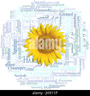 Sunflower head on a beautiful word cloud with the word Sunflower (species Helianthus annuus) written in fifty-nine - Stock Photo