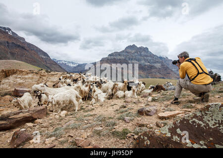 Animal Nature photographer in Himalayas mountains. Spiti valley, Himachal Pradesh, India - Stock Photo