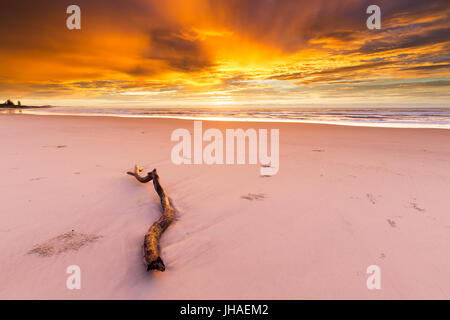 A driftwood log lies on the beach under an amazingly beautiful and intense golden sunrise in Australia. - Stock Photo