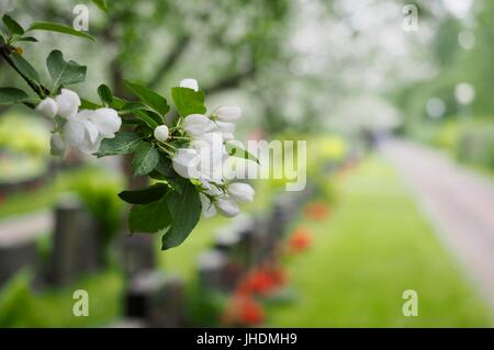 Paradise Breaks in to the Graveyard at the Oulu Cemetery - Stock Photo