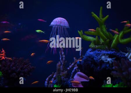 Beautiful jellyfish under water among corals, close up - Stock Photo