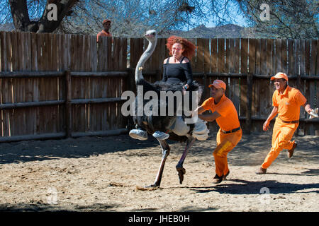 Tourist riding ostrich in a Safari ostrich show farm Oudtshoorn, Little Karoo, South Africa, Africa - Stock Photo