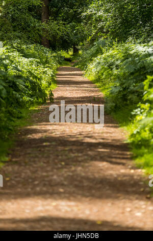 Speech House Woods, Forest of Dean, Gloucestershire. - Stock Photo