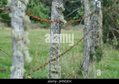 old rusty barbed wire fence with wooden poles and meadow - Stock Photo