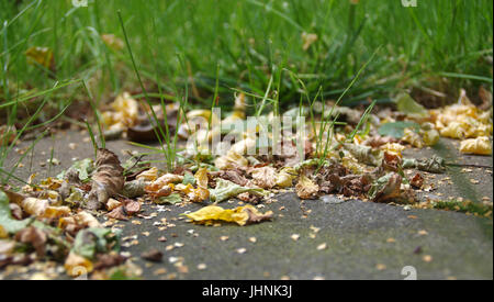 Dry leaves and green grass in late summer in macro view - Stock Photo
