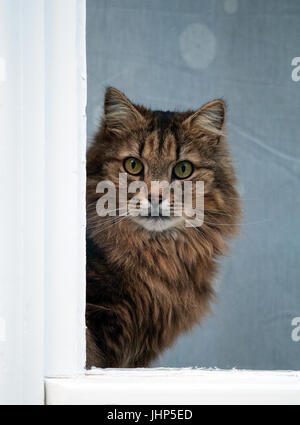 Cat looking out of a window - Stock Photo