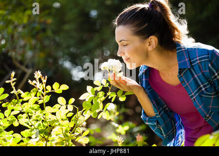Smiling woman smelling roses at backyard during sunny day - Stock Photo