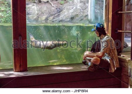 Toronto zoo park North American River Otter Lontra canadensis people animal travel tourism attraction zoological Ontario Canada Stock Photo