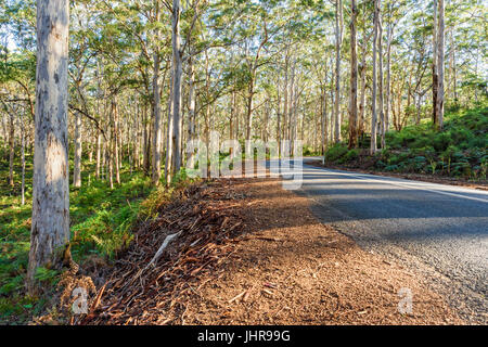 Caves Road through the tall trees of Boranup Karri Forest in the Leeuwin-Naturaliste National Park in the Margaret - Stock Photo