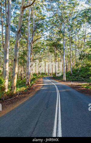 Winding Caves Road through the tall trees of the Boranup Karri Forest in Leeuwin-Naturaliste National Park, Margaret - Stock Photo
