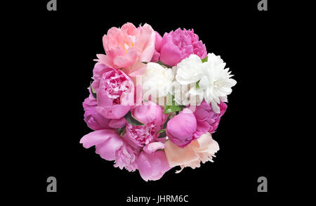 Bouquet peony flowers pink and red isolated on black background. - Stock Photo