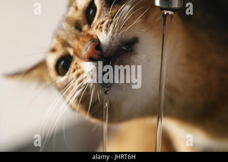 Cat drinking water from sink faucet Stock Photo: 310229804 - Alamy
