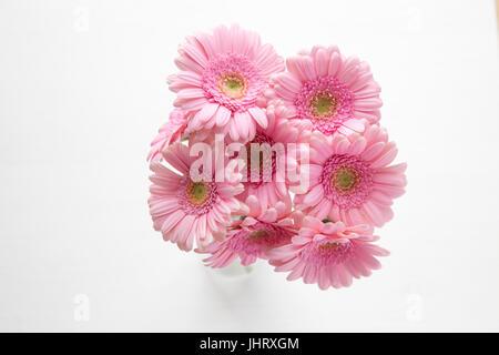 Macro of Pale Pink Gerbera - Stock Photo