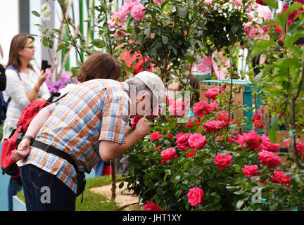 Berlin, Germany. 15th July, 2017. Visitors are interested in the roses at the International Garden festival Berlin - Stock Photo