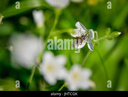 PRIMORYE TERRITORY, RUSSIA – JUNE 29, 2017: A beetle at the Sikhote-Alin Nature Reserve in Russian Far East. The - Stock Photo