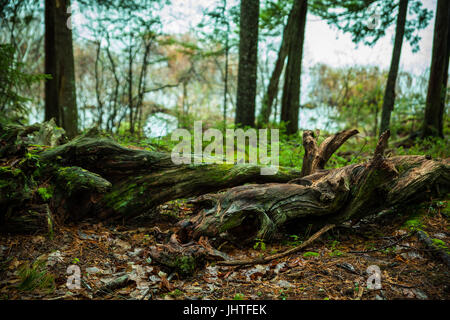 Magical forest scene - Stock Photo